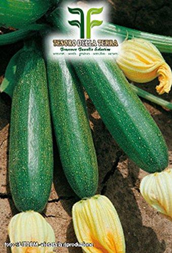 ❦ 40 C.ca Zucchini Botschafter Hybrid Samen - Cucurbita Pepo In Originalverpackung Made in Italy