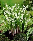 Soteer Seed House - Graines parfumées de muguet Graines de fleurs rares Muguet Plante vivace rustique pour jardin balcon/terrasse...