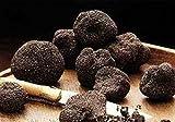 Schwarzer Trüffel-Pilz (Tuber melanosporum) Myzel Spores Spawn getrocknete Samen