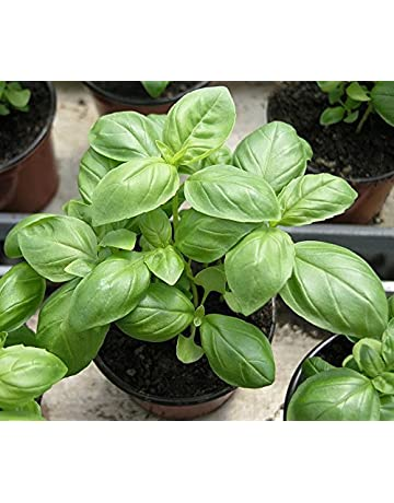 Herb Seeds: Buy Herb Seeds Online at Best Prices in India
