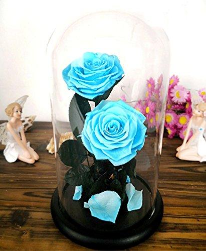 Baobab 's Wish erhalten Frische Blume, enchanted Echte Rosenblätter, natur Eternal Life Rose in Glasglocke mit Geschenk-Box für Valentinstag, Muttertag, Geburtstag, Jahrestag, Hochzeit One Size Blau 2 (Die Das Paare Schöne Biest Und)