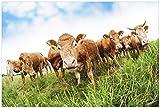 Wallario Premium XXL Vliestapete Kühe im Sommer auf der Weide - Größe: 400 x 267 cm