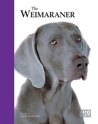 The Weimaraner (Best Of Breed) by Patsy Hollings (2009-01-01) -