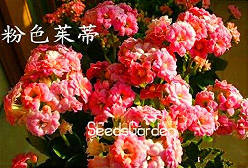 Fash lady prezzo più basso 100 pz/borsa kalanchoe piante in vaso alberelli piantine in vaso fiore bonsai: 12