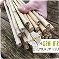 50 Bambusstäbe - Bambusstangen 152 cm lang/ 10-12 mm dick + Zubehör zum Testen von Native Plants auf Du und dein Garten