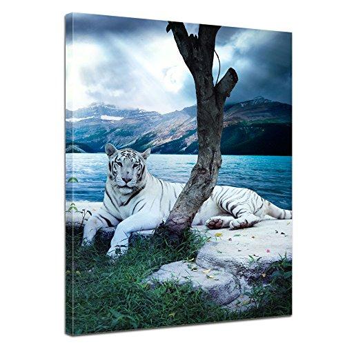 Bilderdepot24 Immagine su telaio a cunei Tigre II - 50 x 60 cm - Già montato sul telaio, Stampa artistica intelaiata e pronta da appendere