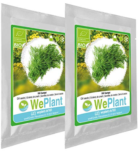 BIO Dill Pflanzen-Samen Set - indoor/outdoor