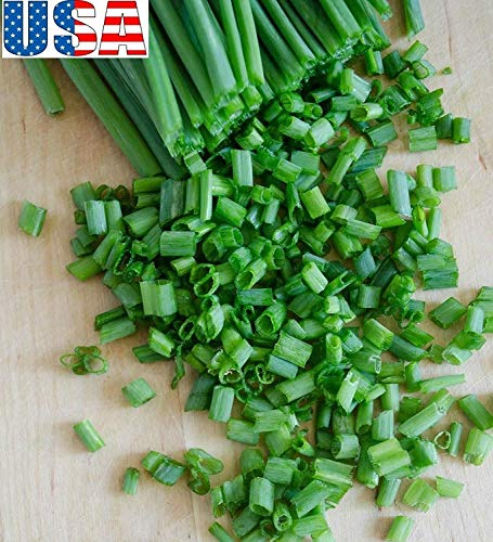 PlenTree USA USA Evergreen Bunching / 200-1600 Zwiebeltopf grün Wunderkerzen