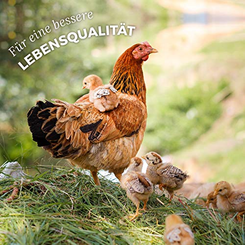 AniForte Hühnertraum - 4