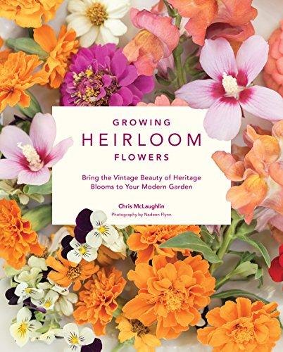 Growing Heirloom Flowers (Blue Hibiscus)