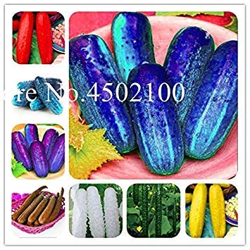 Terrasse Gemüse Herbst Melone Gemischte Gurke Bonsai Garten Gemüse Hausgarten Einpflanzen Can Be erfrischende Obst-50 PC: Gemischt
