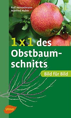 1-x-1-des-obstbaumschnitts-bild-fur-bild