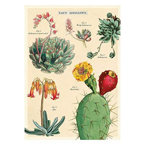Cavallini Dekoratives Geschenkpapier (Kakteen und Sukkulenten 2)