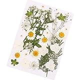 DIY echte getrocknete Blumen natürliche geprägte Blumen Pflanze Probe für das Make-up des Gesichtes, Grußkarten, DIY Telefon Shell, Kunsthandwerk handgefertigt, Home Decoration