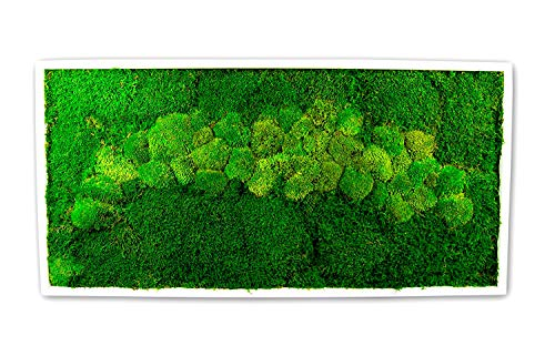 Moosbild Wandbild mit Moos Kugelmoos Moosplatte Pflanzenbilder Moosbilder versch. Maße günstig (110x55 cm, weiß)