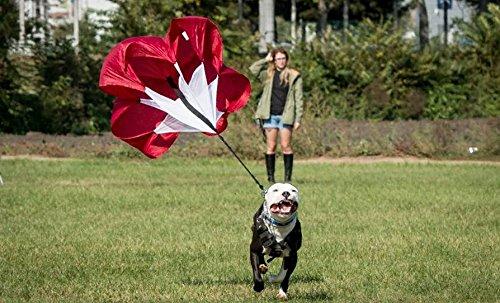Firepaw Laufrutsche/Fallschirm für Hunde/Widerstand/Training /