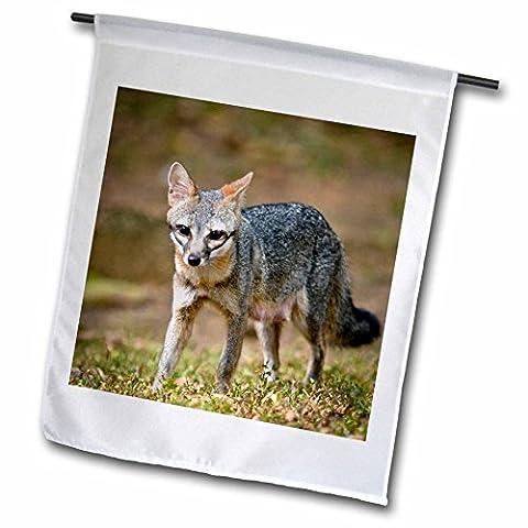 3drose FL _ 85587_ 1Sa02Porte-clés Mwi0017Gris Fox s'Interrompt pour identifier une Menace potentiel Mark Williford Drapeau de jardin, 12par 45,7cm