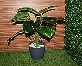 #10: Fourwalls Miniature PVC Artificial Plant (54 cm, Green, AP 12 HD R348-1195)