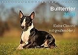 Bullterrier 2019 - Kleine Clowns mit großem Herz (Tischkalender 2019 DIN A5 quer): Bullterrier, wie sie sind. Witzig und frech. (Monatskalender, 14 Seiten ) (CALVENDO Tiere)