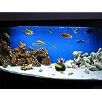 TM Aquatix Aquarium Sand White Fish Tank Gravel Natural Substrate (10kg, White 1-1,5mm) 6