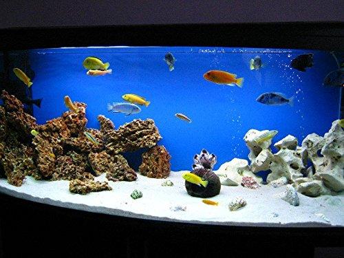 TM Aquatix Aquarium Sand White Fish Tank Gravel Natural Substrate (5kg, White 1-1,5mm) 2