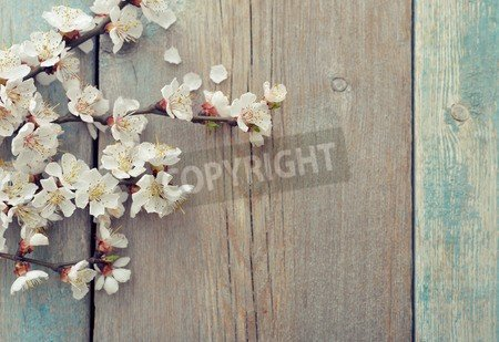 "Leinwand-Bild 60 x 40 cm: ""Beautiful blossom branch over wooden background closeup"", Bild auf Leinwand"