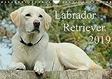 Labrador Retriever 2019 (Wandkalender 2019 DIN A4 quer): Hundekalender - Faszination Labrador (Monatskalender, 14 Seiten ) (CALVENDO Tiere)