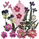 Pressed flower, 1 pack of Mixed flowers & foliage. Art & craft, card making materials.