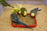 #1: Bird Food/ Feed, Healthy, Suitable For All Ages And All Type Of Birds By Money Saving (1 kg)