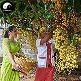 Kaufen Baccaurea ramiflora Obstbaum-Samen 120pcs Pflanze Baccaurea ramiflora Baum