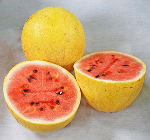 Yellow Israeli Goldene Midget Wassermelone Citrullus Lanatus 5 Fresh Seeds * SELTEN!
