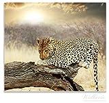 Wallario Herdabdeckplatte / Spitzschutz aus Glas, 1-teilig, 60x52cm, für Ceran- und Induktionsherde, Leopard auf Baumstamm in Afrika