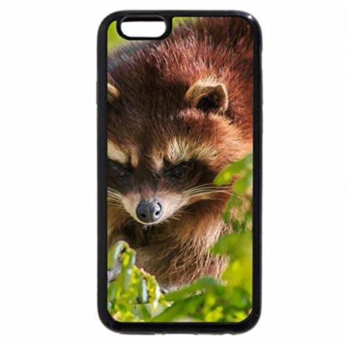 iPhone 3S/iPhone 6Coque (Noir) Petit raton laveur Bandit visage