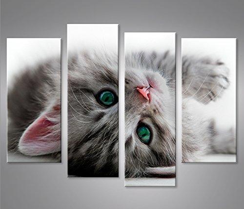 Bild Bilder auf Leinwand Kätzchen Katze mit grünen Augen 4er XXL Poster Leinwandbild Wandbild Dekoartikel Wohnzimmer Marke islandburner (Katze Bilder)