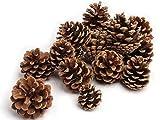 NaDeco Tannenzapfen ca. 5-6cm 1kg | Pinus nigra | Schwarzkiefern Zapfen | Kiefernzapfen | Tannen Zapfen | Naturzapfen | Weihnachtsdeko | Adventsdeko