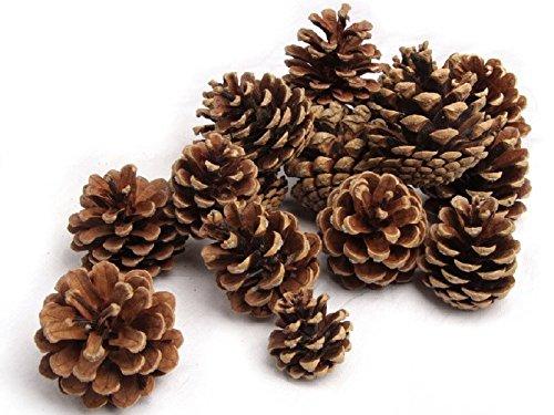 NaDeco® Tannenzapfen ca. 5-6cm 1kg | Pinus nigra | Schwarzkiefern Zapfen | Kiefernzapfen | Tannen Zapfen | Naturzapfen | Weihnachtsdeko | Adventsdeko