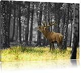 röhrender Hirsch im Wald schwarz/weiß Format: 80x60 auf Leinwand, XXL riesige Bilder fertig gerahmt mit Keilrahmen, Kunstdruck auf Wandbild mit Rahmen, günstiger als Gemälde oder Ölbild, kein Poster oder Plakat