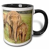 3dRose mug_71690_4 Elephants, Corbett National Park, Uttaranchal, India AS10 JRA0017 Jagdeep Rajput Two Tone Black Mug, 11 oz, Black/White