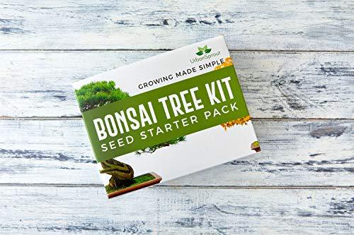 Zoom IMG-5 kit bonsai per crescere il