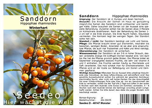 Seedeo Sanddorn Hippophae rhamnoides 60 Samen