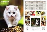 Kalenderfabrik Katzen 2018 - Bildkalender (24 x 34) - Tierkalender
