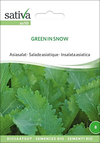 Asiasalat Green In Snow | Bio-Salatsamen
