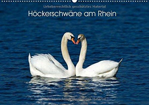 Höckerschwäne am Rhein (Wandkalender 2018 DIN A2 quer): Aufnahmen von Höckerschwäne am Rhein zwischen Speyer und Karlsruhe (Monatskalender, 14 Seiten )