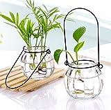 dealglad® Transparent Glas Vase klein hängende Kürbis Flasche Hydrokultur Blume Glas Vase Innen Home Dekoration Flasche