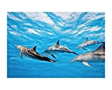 Vlies Fototapete DELFINE 330 x 220 cm | Wandbilder XXL - Riesen Wandbild - Wand Dekoration - Vliestapete - Wandtapete | PREMIUM VLIES QUALITÄT