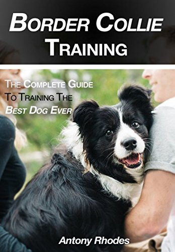border-collie-training-the-complete-guide-to-training-the-best-dog-ever