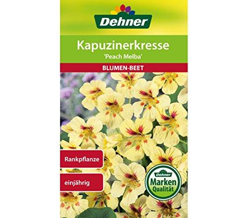 "Dehner Blumen-Saatgut, Kapuzinerkresse, ""Peach Melba"", 5er pack (5 x 5 g)"