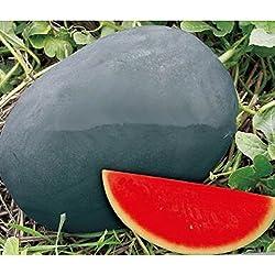 Süße Riese Schwarze Haut Wassermelone Samen, kernlose Wassermelonen Samen, Garten Bepflanzung, Hof Bonsai Früchte - 20 Teilchen / bag
