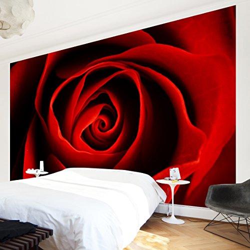 Apalis Vliestapete Blumentapete Liebliche Rose Fototapete Breit | Vlies Tapete Wandtapete Wandbild Foto 3D Fototapete für Schlafzimmer Wohnzimmer Küche | rot, 94692
