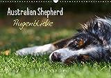Australian Shepherd - Augenblicke (Wandkalender 2019 DIN A3 quer): Faszination Australian Shepherd - Berührende Augenblicke begleiten Sie durchs ganze ... (Monatskalender, 14 Seiten ) (CALVENDO Tiere)